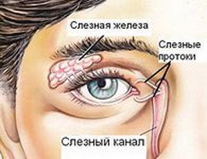 Расположение слезной железы и протоков
