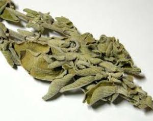 Сухие листья шалфея